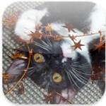 Süßer Katzen-Adventskalender für das iPhone